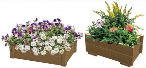 彩木の使用例植栽