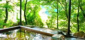 露天風呂やサウナでも使える彩木