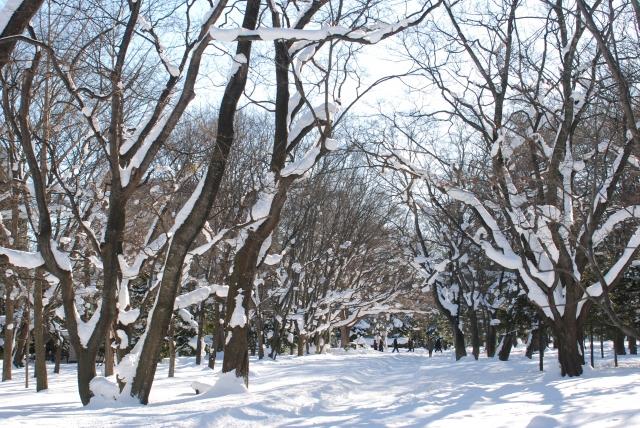 積雪地帯でも活躍する彩木ウッドデッキ