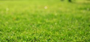 お手入れが簡単な彩木と人工芝の庭(その01)