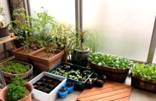 【ベランダ】家庭菜園で新鮮野菜を育ててみよう