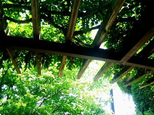 緑を楽しむ「パーゴラ」
