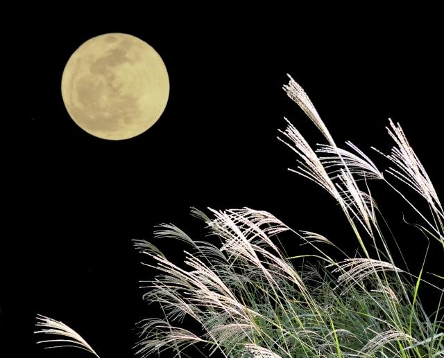 あやかの彩木探訪!<br>ウッドデッキでお月見を楽しもう(前編)