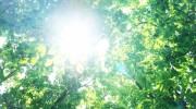 夏場のウッドデッキと紫外線