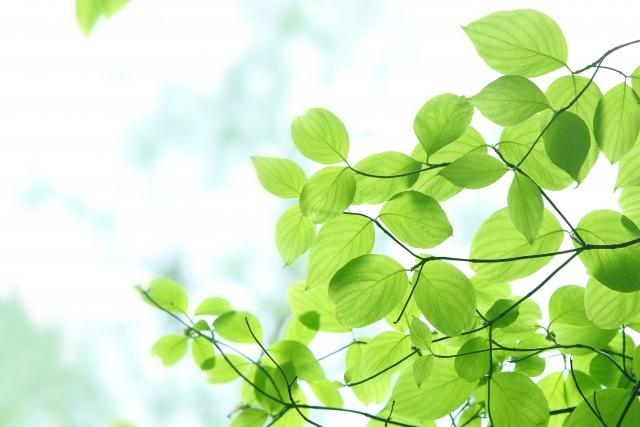 ウッドデッキの落葉樹(その03)
