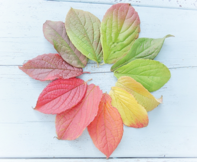ウッドデッキの落葉樹(その01)