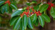 ウッドデッキの常緑樹(その01)