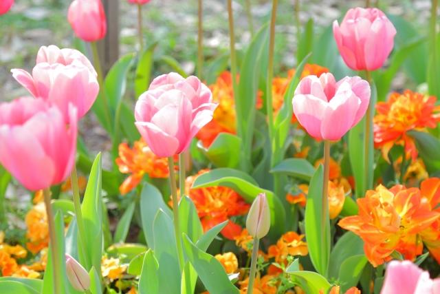 春のウッドデッキや庭を飾る花(その01)