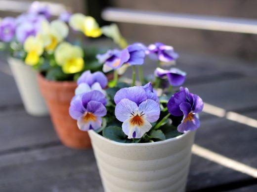 秋のウッドデッキや庭を飾る花(その02)