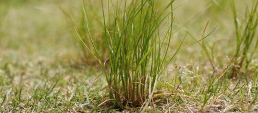 ウッドデッキが雑草対策になる理由|ウッドデッキの防草対策5つも